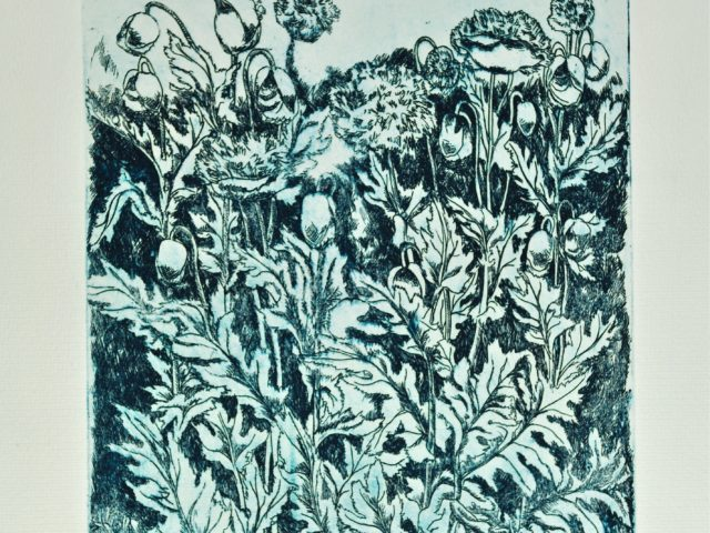 Papaveri -  acquaforte su zinco