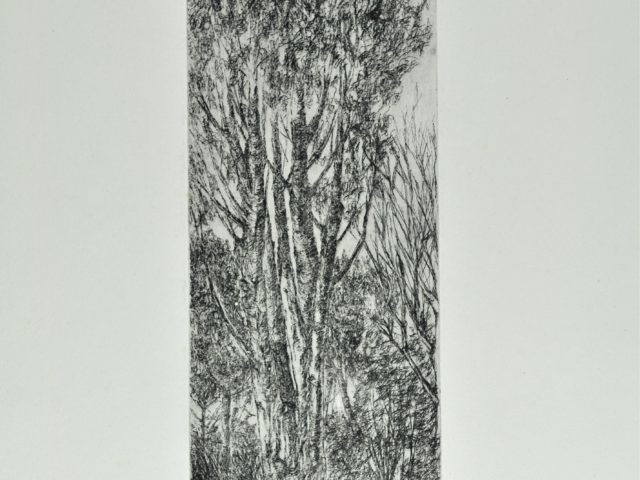 Bosco toscano - acquaforte su zinco